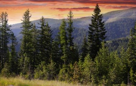 arbol de pino: Glaciar del parque nacional Foto de archivo