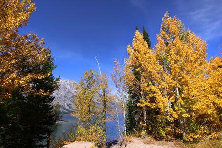 Fall in Grand Tetons photo