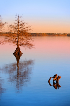 cypress tree: Cypress tree in the lake and its reflections