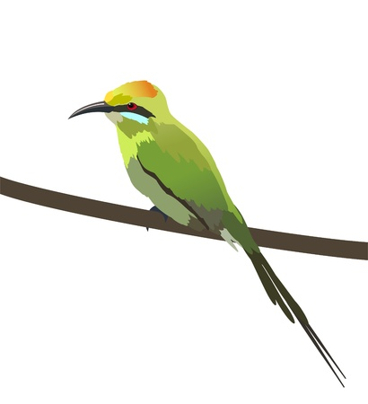 eater: An illustration of colorful Green bee eater