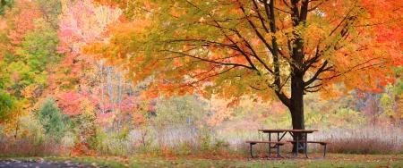 Relaxing autumn scene photo