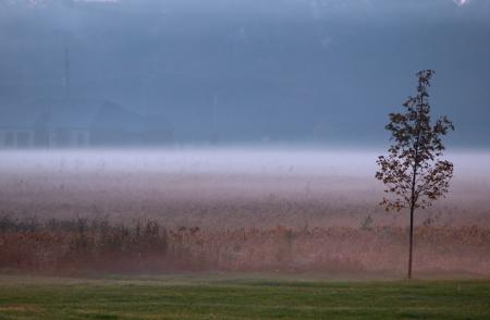Early morning fog in the farm photo