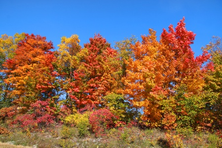 fallcolours: Colorful autumn trees in the park