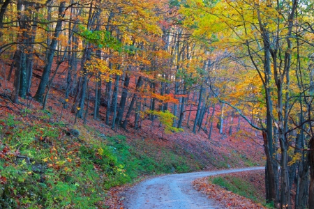 west virginia: Forest drive in autumn time Stock Photo