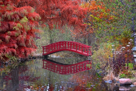 ponte giapponese: Giardino giapponese in autunno