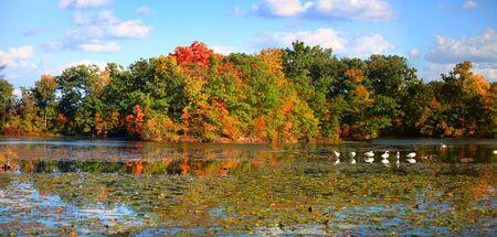 Panoramic view of bright autumn trees   photo