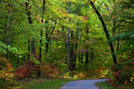 bike trail: Biking trail through colorful autumn trees