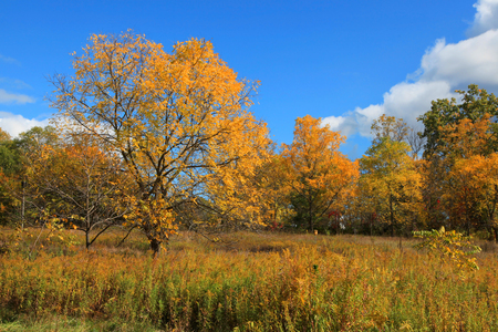 Early autumn scene in Michigan photo
