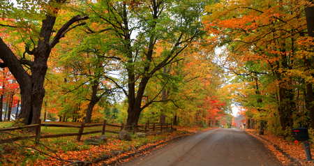 fallcolours: Bright autumn trees by the country road