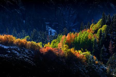 colorado state: Sun light on autumn trees