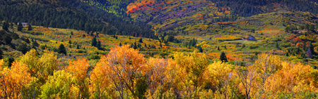 Panoramic view of colorful Aspens and Cotton woods in Colorado photo