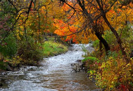Running water through autumn trees Stock Photo