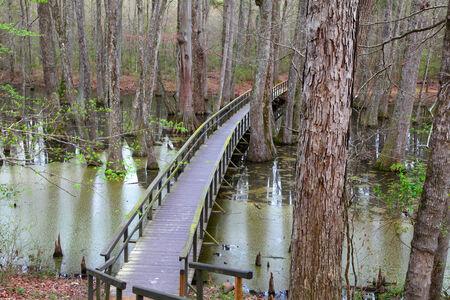 cypress tree: Cypress tree swamp