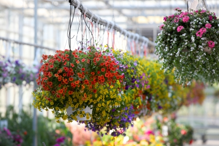 Hanging flower pots in the nursery