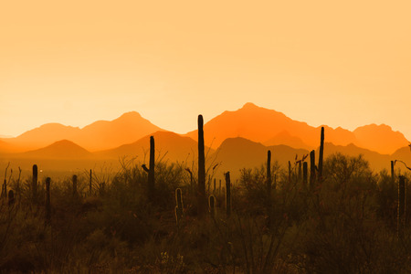 sonoran: Saguaro national park