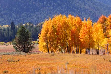 Autumn in Yellowstone photo