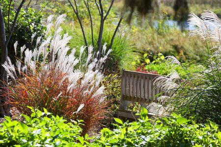garden bench: Dense bushes and shrubs in the garden