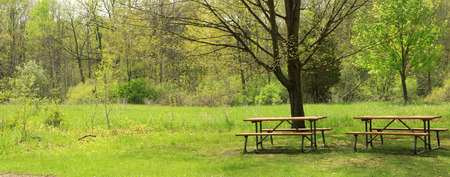 treed: Panoramic view of lush green park and picnic tables