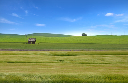 Wheat fields in Palouse,WA Stock Photo
