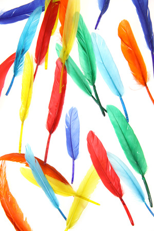 lightness: Colorful feathers against white background