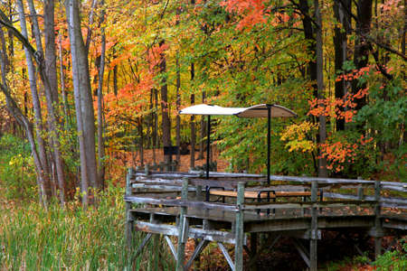 treed: Picnic table in the autumn