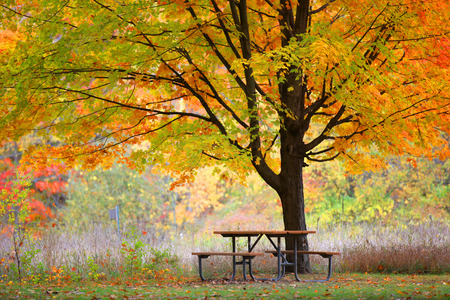 treed: Picnic table and autumn tree