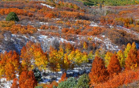 sniffles: Autumn trees on Mount Sniffles