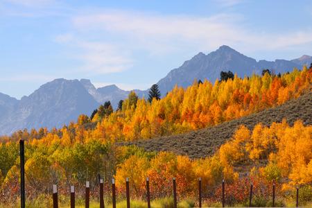 Autumn in Grand Tetons photo