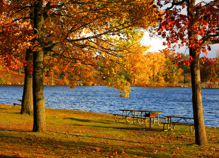 Autumn trees by the lake photo