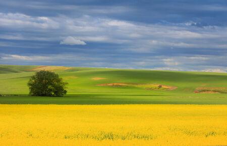 Beautiful painting like scenery