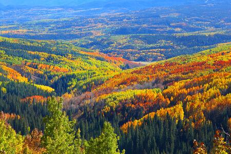 aspen leaf: Carpet of autumn trees