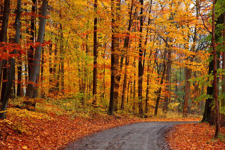 秋の木々 の未舗装の道路 写真素材