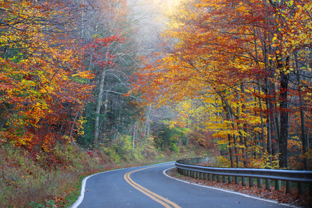 west virginia trees: Winding road through autumn trees