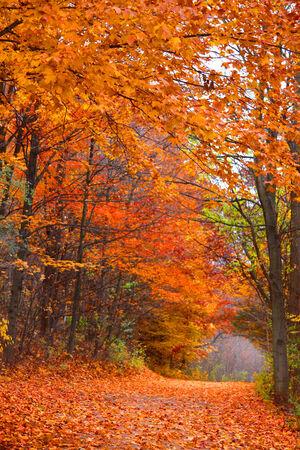 Tunnel van de herfst bomen Stockfoto