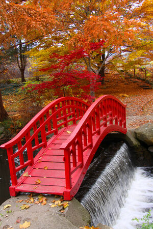 autumn colour: Japanese garden
