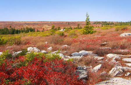 dolly: Dolly Sods West Virginia Autumn Landscape Stock Photo