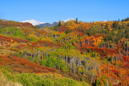 splendour: Autumn splendour