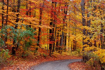 Belle piste cyclable à travers les arbres d'automne Banque d'images - 34854590