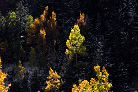 Aspen trees on mountain tops in shadows
