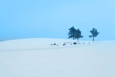 wintry landscape: Winter landscape with big snow