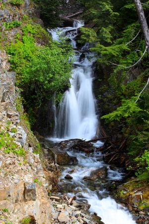 mount rainier: Water falls in Mount Rainier Stock Photo