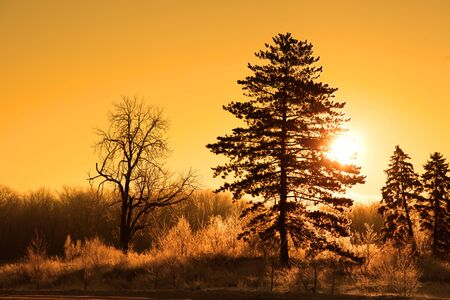 michigan snow: Morning sun in winter time Stock Photo