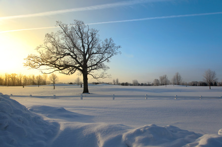tall tree: Single tall tree against sun rise in winter time Stock Photo