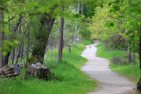 Kronkelend pad in het natuurpark