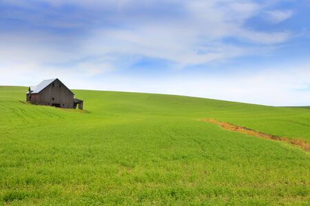 hiils: Old Barn in the middle of wheat fields