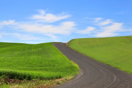 palouse: Dirt road through wheat fields in Palouse Stock Photo