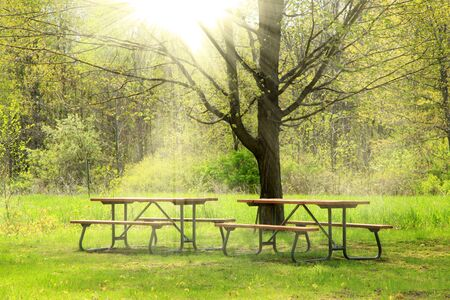 treed: Two picnic tables in the park in spring time