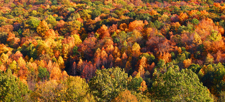 west virginia trees: Autumn tree background