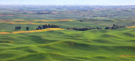 palouse: Wheat fields in Palouse from Steptoe butte Stock Photo
