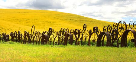 rims: Fence of wheel rims against rapeseed